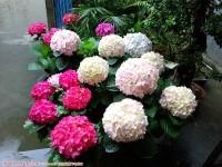 小院子的花